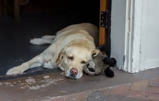 Loyal Dog Waits For Owner for Two Years Despite Owner